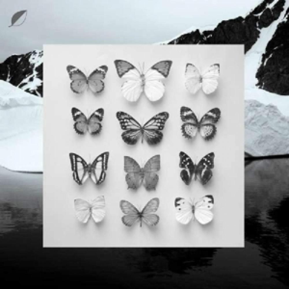 Альбом Young Alaska